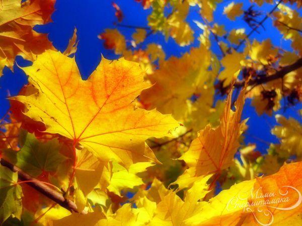 пришла осень 4